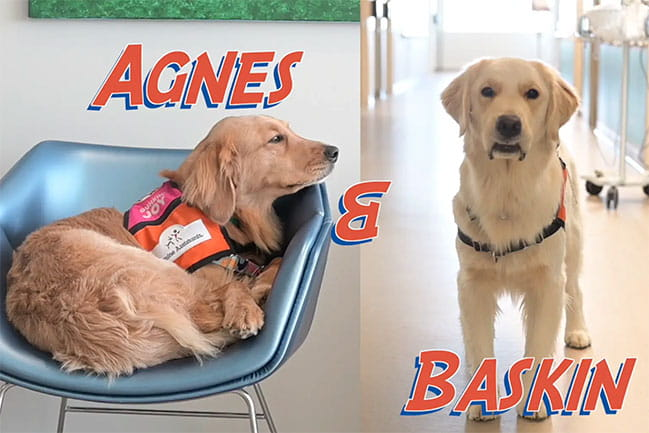 Hospital Dogs Agnes and Baskin