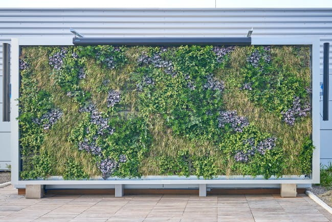 Boeing Outdoor Play Area Living Wall